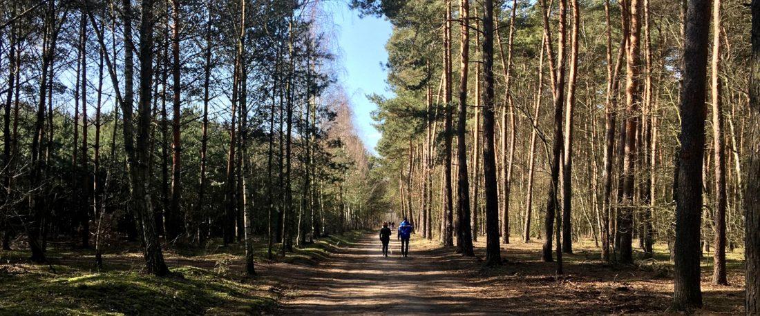 Las Dąbrówka Zakrzewo Palędzie