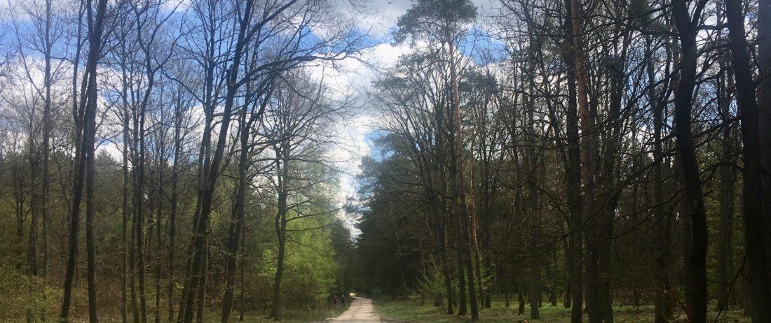Lasy Czerniejewa