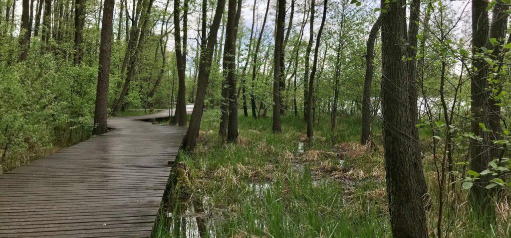 Wolsztyn Ścieżka Jezioro