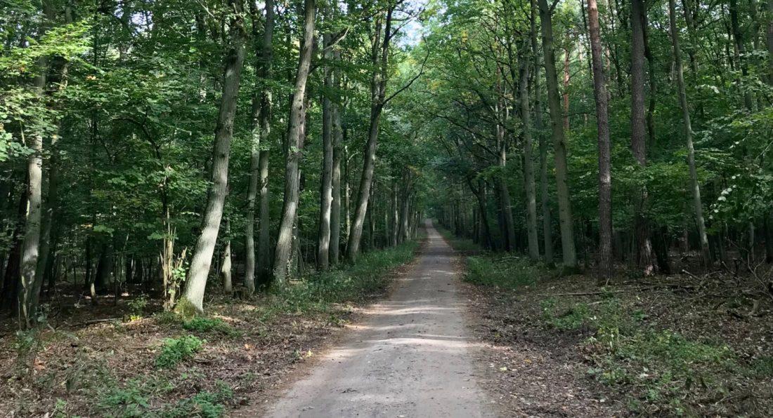 Szlak czerwony rowerowy Wielkopolski Park Narodowy